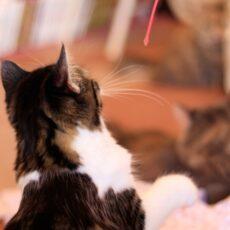 今年は猫を飼いたい!相性のいい猫の選び方3選