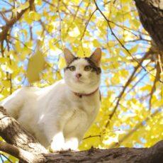 保護猫を迎えたい!知っておくべき5つの心構え