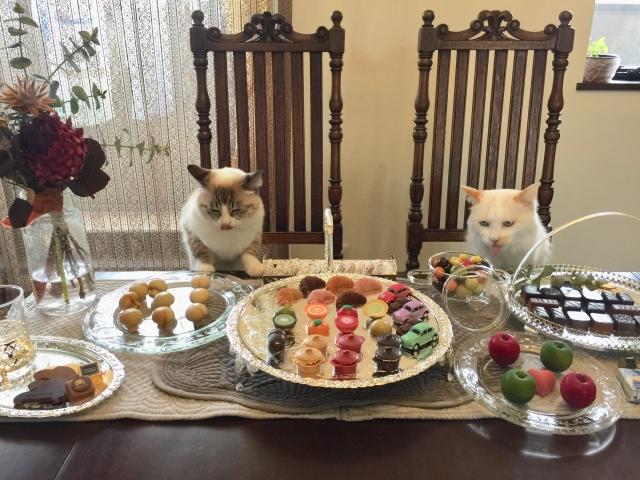 キャットフードにトッピング5選♪猫が喜ぶご飯作り!
