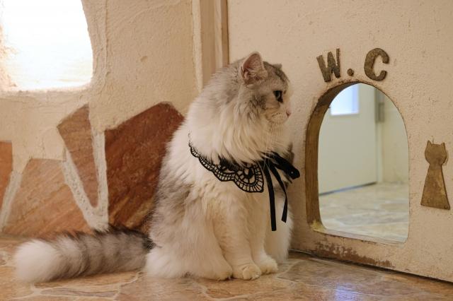 猫がトイレの砂を散らかすのはなんで??猫の心理を公開!