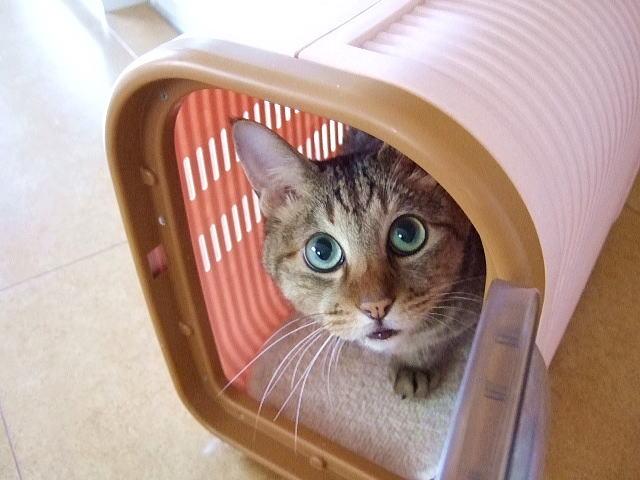 災害時に知っておきたい、猫のためにできる『安全確保』!