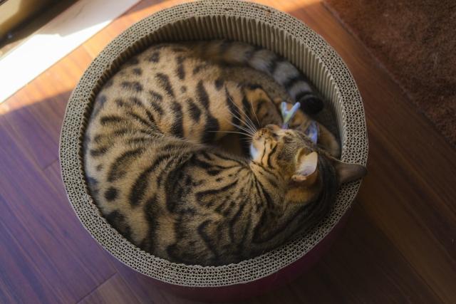 猫のための『最高の寝床』を作ってあげたい♥