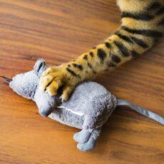 猫が鳥を捕まえてくるのはなぜ?鳥と猫は一緒に飼える??疑問解消!