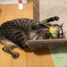 自粛期間は猫と遊ぼう♡猫が遊びに誘ってくる時のしぐさ5つ