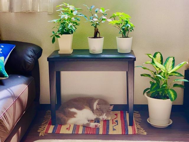 猫にとって『危険な構造の家』とは!?その事故防止策を伝授!