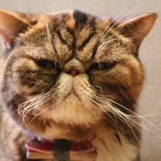 自粛中に気をつけたい!猫にとってストレスになる『生活音』とは?