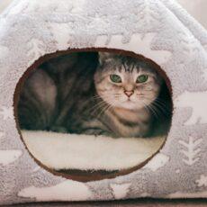 猫にも衛生的に過ごしてほしい…猫ベッドはどのくらいの頻度で洗う?