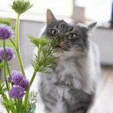 夏間近!猫が食べてもOKな『夏野菜』5種