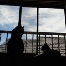 猫と暮らすためにリフォームしたい!チェックポイントや値段と実例3つご紹介