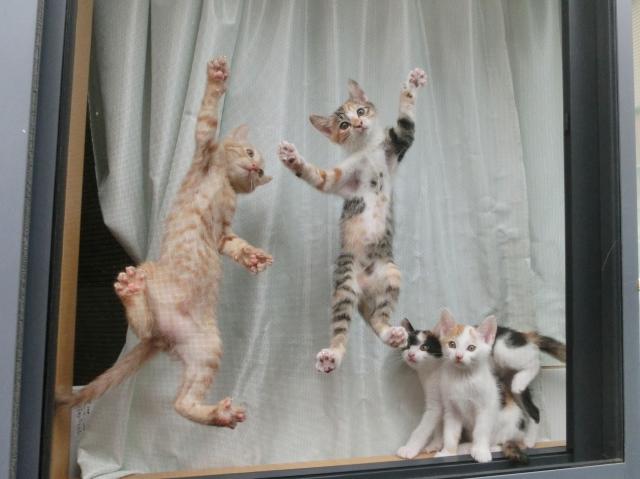 怒らないで!イタズラと誤解されがちな猫の行動パターン4選