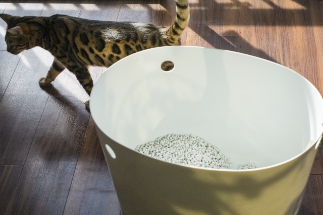 夏本番!猫のおしっこの臭い対策と気をつけたい病気