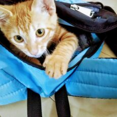 愛猫との災害避難に備えて飼い主さんの心構えと準備するもの