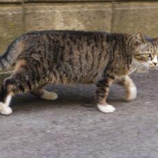 飼い猫が脱走…!猫を捕獲する4つの方法を伝授!