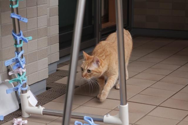 暑い夏、猫の脱走にご注意!『脱走』しやすい猫の特徴3つ
