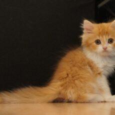 『売れ残った猫』を助けるためにできる3つのこと