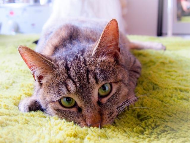 猫が『上目遣い』で見てくるときに訴えていること3つ