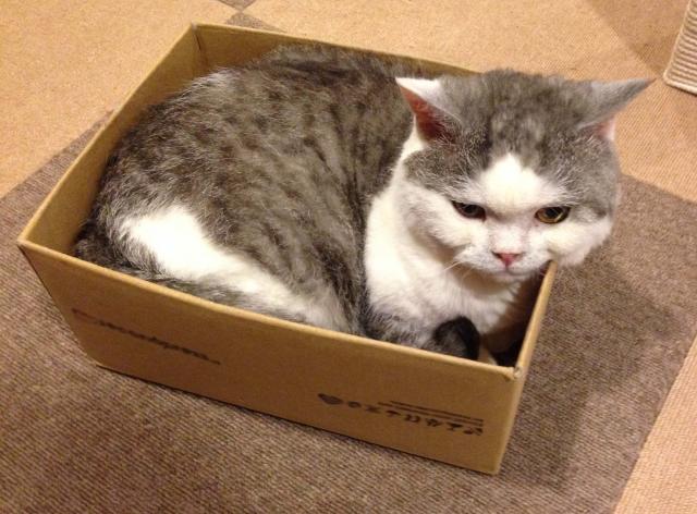 猫が「気に入らなかったモノ」はこうする!活用術3選